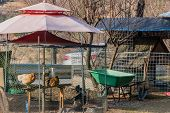 Three Large Chickens In Wire Mesh Enclosure With Umbrella Roof On Sunny Afternoon. poster