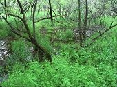 image of winnebago  - Vegetation covers a floodplain forest at Blackhawk Springs Forest Preserve in Illinois - JPG