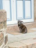 Dog Waits Near Closed Door