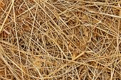 Dried Haydried Hay