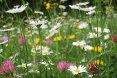 flor de Verão