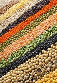 colorful  striped rows of lentils, soya beans, peas, buckwheat, soybeans, legumes, rice, backdrop