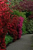 Garden of Giverny