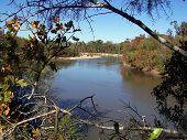 Altamaha River Beauty