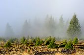 Foggy Mountain Forest in Cozia National Park, Romania, Europe
