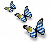Three Uruguayan Flag Butterflies, Isolated On White