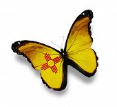 New Mexico Flag Butterfly, Isolated On White