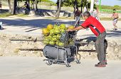 Man carries coconuts