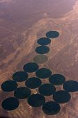 Pivot Farming