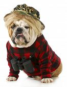 hunting dog - english bulldog dressed up like a redneck hunter with binoculars