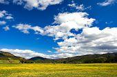 Pure Sky, Pure Meadow