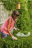 Woman Trims Landscaping