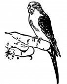 Parakeet 2 - Retro Clip Art Illustration