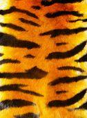 great tiger fur texture