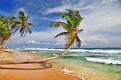 wild beautiful beach in Sri lanka