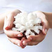Coral blanco en las manos suaves