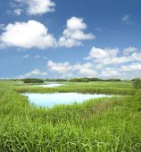 Country wetland landscape