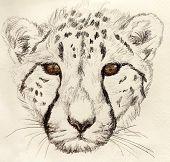 Cheetahah