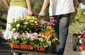 Rear view of young couple pulling cart full of various flowers