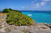Barbados Ocean cliff