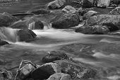 image of brook trout  - A black and white image of a mountain trout stream in Southwestern Virginia - JPG