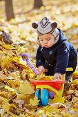Little boy plays uploading plastic wheelbarrow with dried leves in autumn park