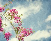 Bush of Bougainvillea flowers  against the blue sky.  Added paper texture.