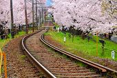 Sakura tree and train track