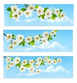 Three spring banners with blossoming tree brunch with spring flowers. Raster version.