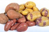Four Varieties Of Potatoes