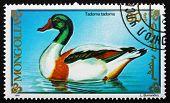 Postage Stamp Mongolia 1991 Common Shelduck, Bird