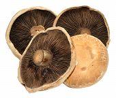 Large Flat Mushrooms