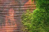 Redwood Log
