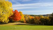 Golf Course Color