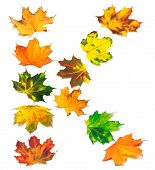 Letter K Composed Of Autumn Maple Leafs