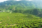 stock photo of cameron highland  - Landscape with tea plantation in Cameron Highlands Malaysia - JPG