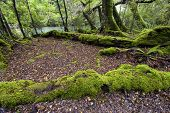 Moss covered trees, Fiordland National Park, South Island, New Zealand