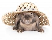 stock photo of dwarf rabbit  - Dwarf rabbit in a straw hat - JPG
