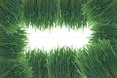 Background Maked From Grass