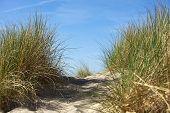 Dune With Marram Grass Close-up