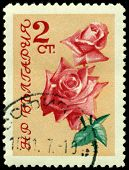 Vintage  Postage Stamp. The Flowerses Of The Rose On Yellow Background.