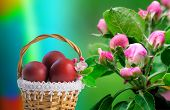 Red Easter Eggs In A Basket And Flowers Of Apple Trees.