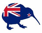 Neuseeland kiwi