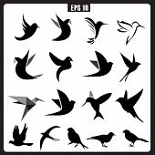 picture of cardinal-bird  - Vector Collection of Bird Silhouettes - JPG