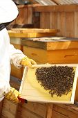 Beekeeper Is Holding A Frame