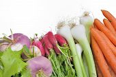 foto of turnips  - carrots onions radishes turnips isolated on white background - JPG