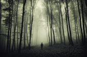 Man in haunted forest