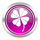 four-leaf clover violet icon