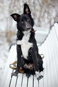 Black Doggie On Walk.