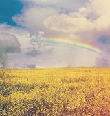 beautiful sky with rainbow and yellow rapeseed field, retro film filtered, instagram style